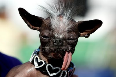 ugliest dog competition