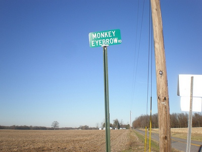 monkey kentucky