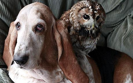 a bassett hound and an owl