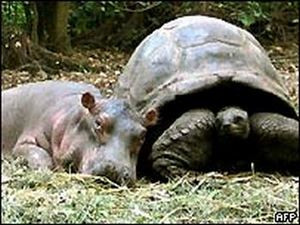 baby hippo and tartoise