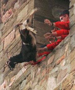 goat tossing festival