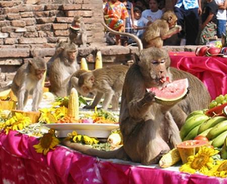 lopburi monkey buffet