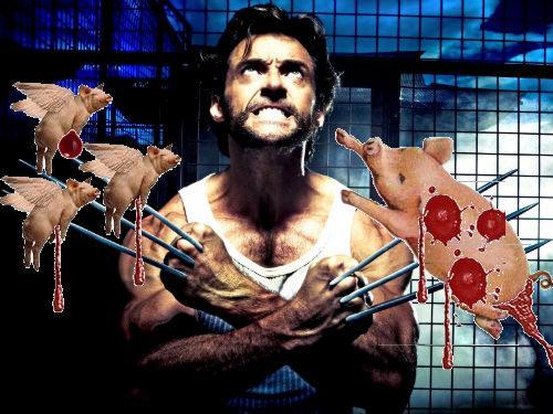 swine flu wolverine