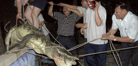 crocodile kill