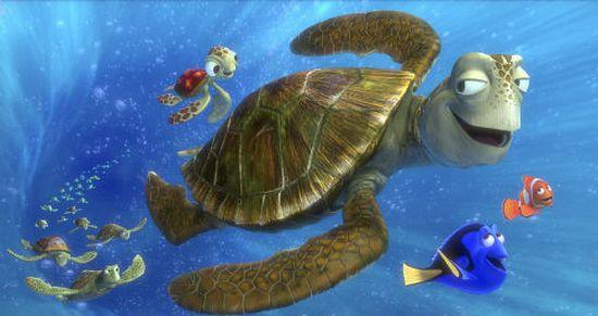 sea turtles01