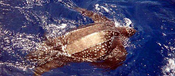 sea turtles02