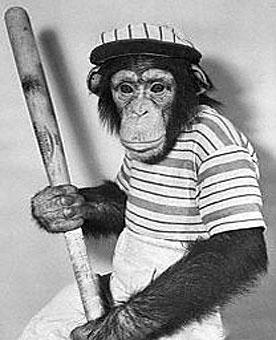 monkey holding baseball bat