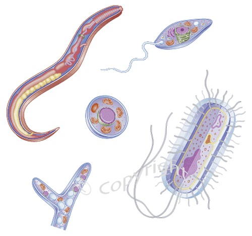 parasites to cure asthma02