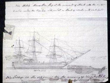 whale ship essex