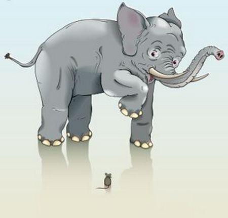 elephants01