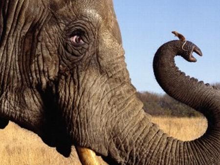 elephants02