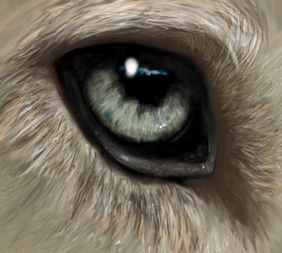 warewolf02