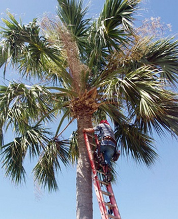 coconut safety engineer01