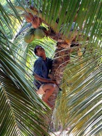 coconut safety engineer02