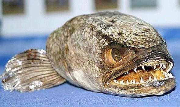 fishzilla01