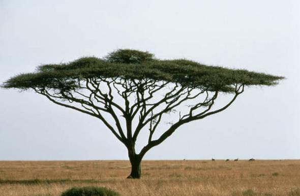 killer trees01