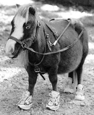 mini horses1