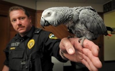 parrots2