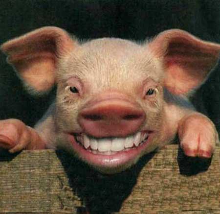 anonymous pig farmer
