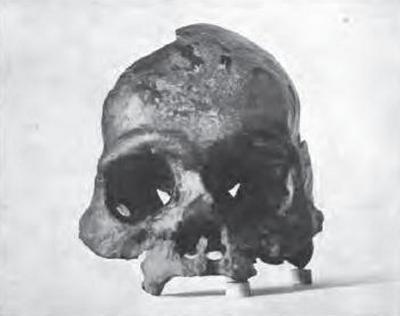 calaveras skull