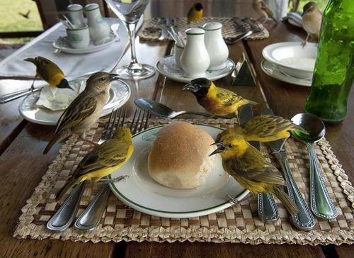birds sharing bread