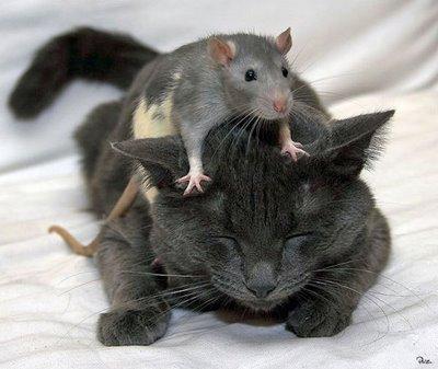 trusting cat
