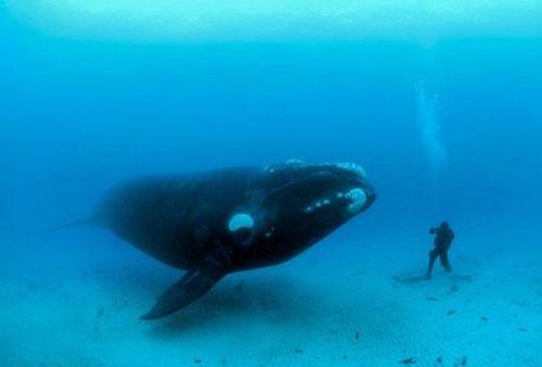 chummy whale
