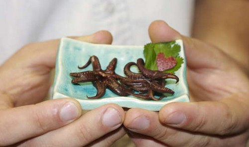 chocolate covered squid1