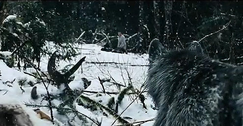The Wolves from the Grey