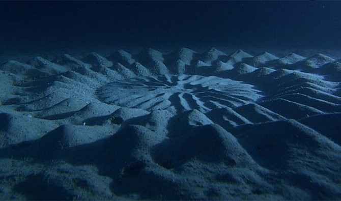 Sea Circles