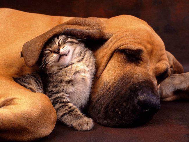 Comfort Eating Cats and Dogs