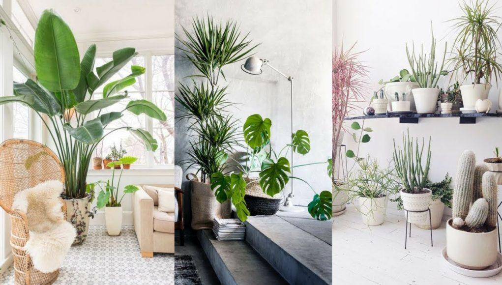 Interior Decoration Indoor Plants Weird Worm